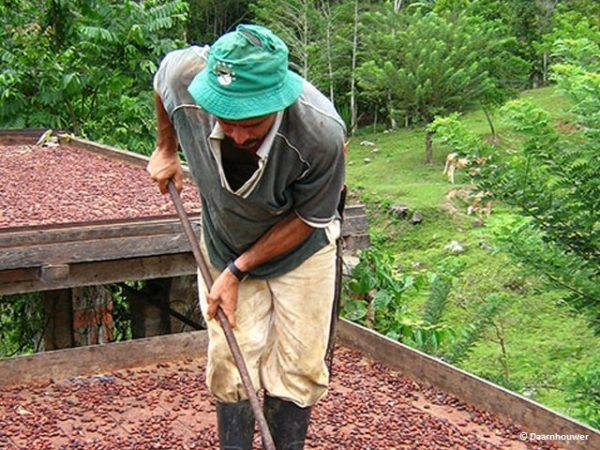 Morin-Colombia-Santander-drying